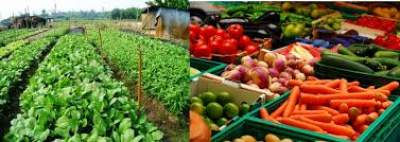 TOP 10 WAYS INVESTING IN AFRICA AGRICULTURE 2020- STEP BY STEP GUIDE TO STARTUP