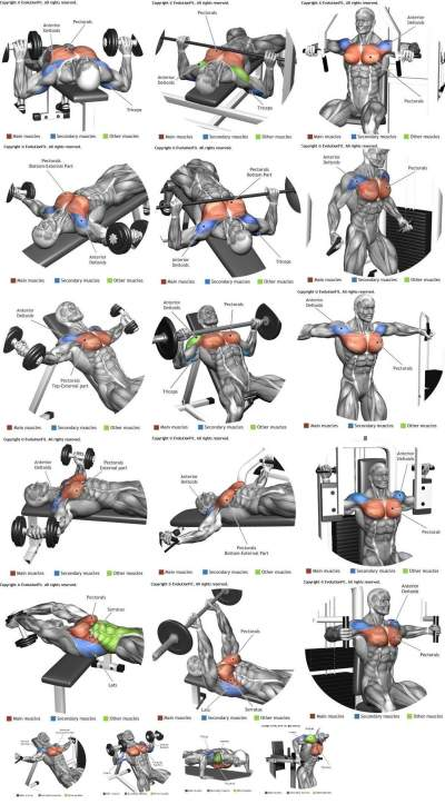 BEST WORKOUTS FOR THE CHEST TOP 10 TIPS 2020