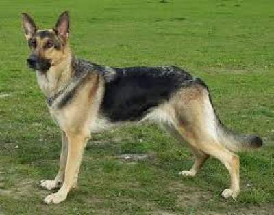 BEST DOG FOR THE FAMILY TOP 10 BREEDS 2020