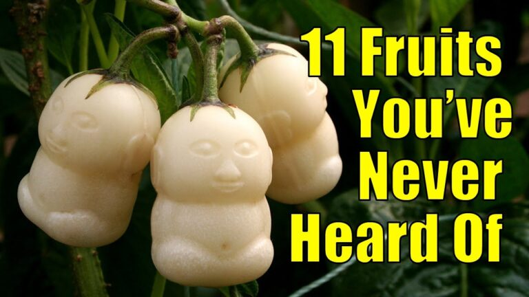 11 Fruits You've Probably Never Heard Of